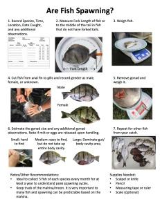 Fish spawning guides hawaiian moon calendar project for Hawaiian moon fish